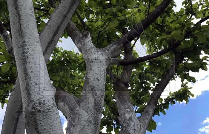 Когда обрабатывать яблони от вредителей осенью - советы специалистов