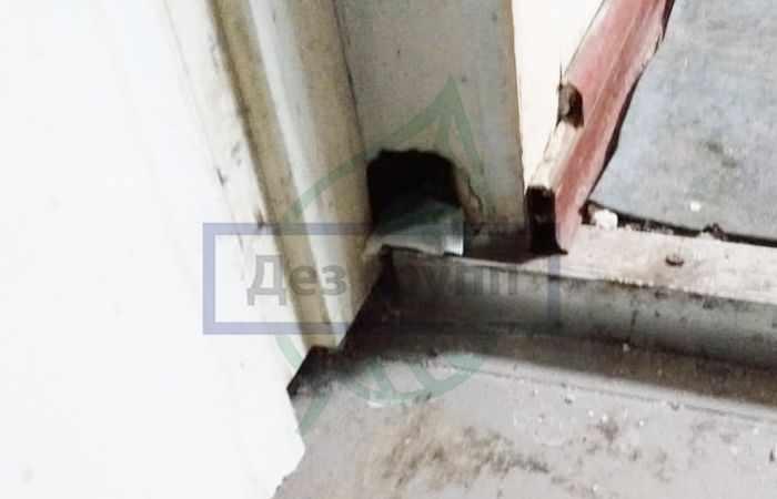 Дератизация крыс в помещениях