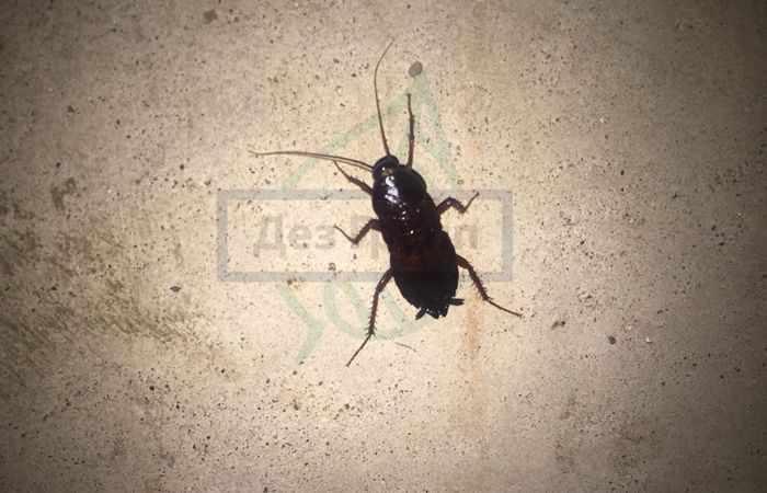 Борьба с насекомыми в квартире - тараканы