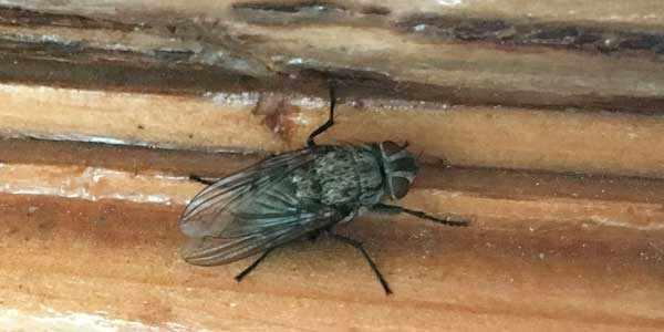 Слепень - часто встречаемое и ненавистное насекомое всех дачников