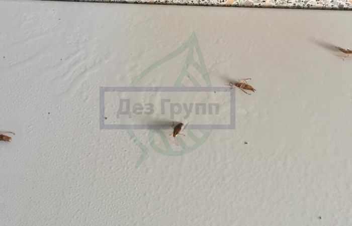 Дихлофос от тараканов: инструкция по применению