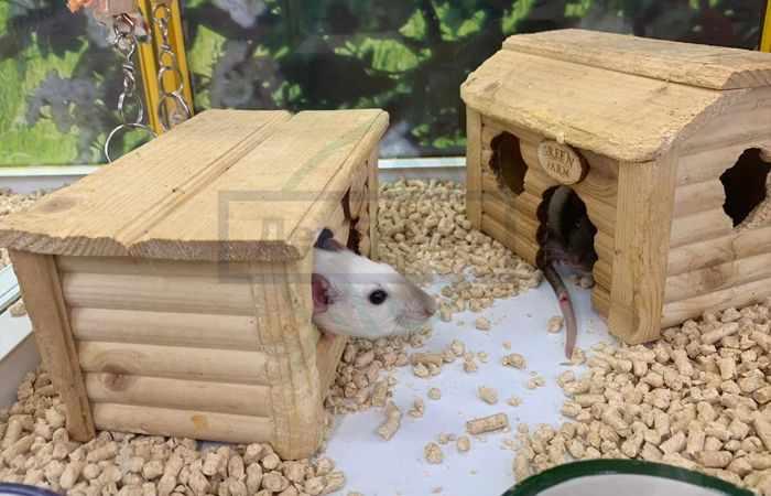 Дератизация и дезинсекция крыс и насекомых