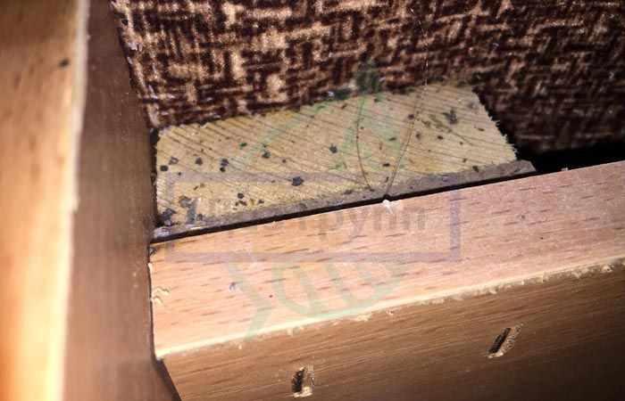 Гнездо клопов в диване