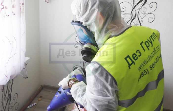 Санитарная служба по уничтожению насекомых в Москве