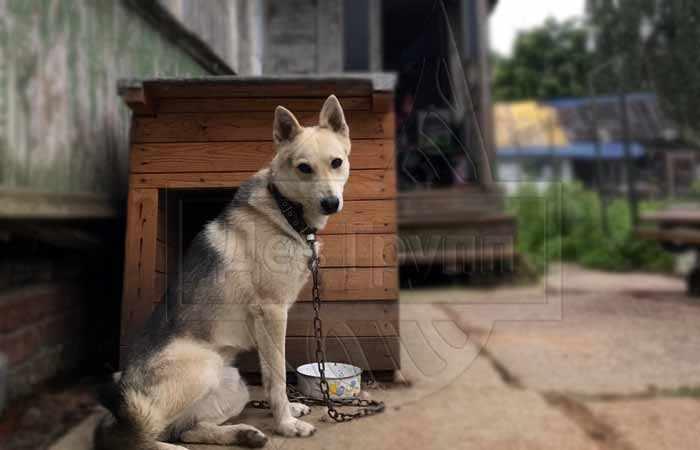Как удалить блох у собаки