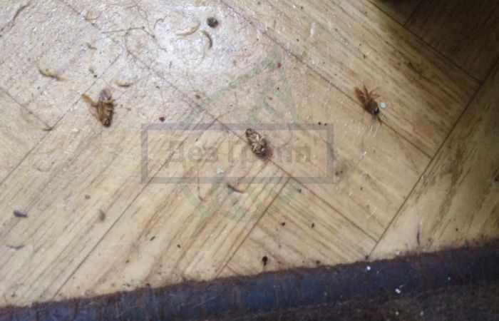 Отпугиватель от тараканов