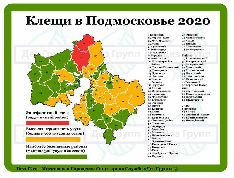Клещи в Подмосковье 2020: карта опасных районов