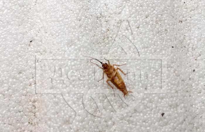 Тараканы в столовой - кто может уничтожить?