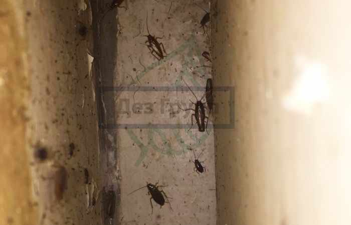 Истребление тараканов для организаций