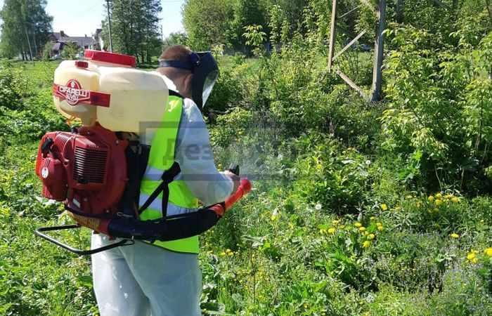 Химические методы борьбы с насекомыми-вредителями - служба СЭС