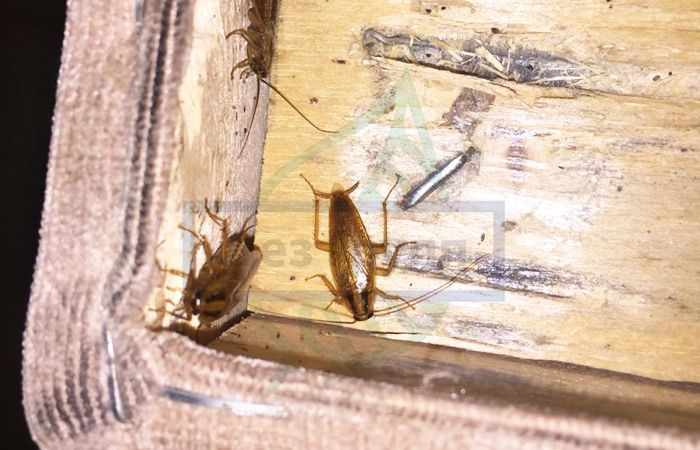 Дезинфекция от тараканов Москва цены
