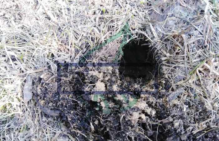 Средства от кротов на дачном участке - норы