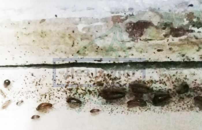 Отрава для тараканов в домашних условиях