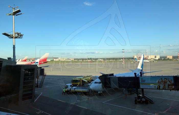 Дератизация авиатранспорта