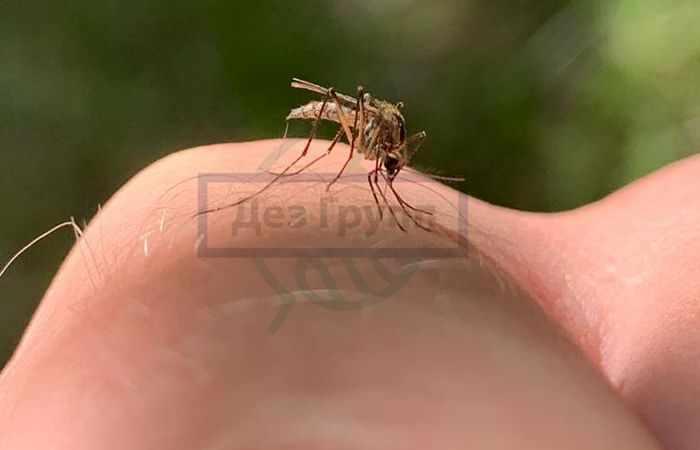 Гнус - самый распространенный вид насекомых