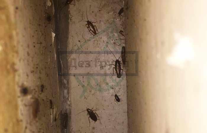 Почему в квартире появились тараканы?