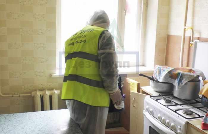 Как избавиться от пищевой моли на кухне в Москве