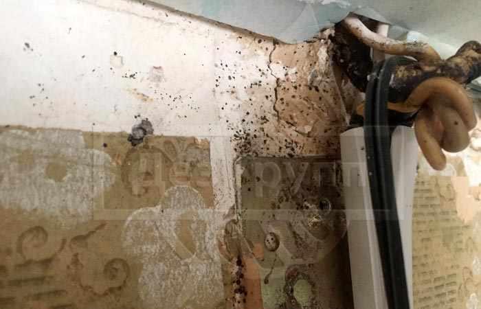 Дезинсекция насекомых в квартире