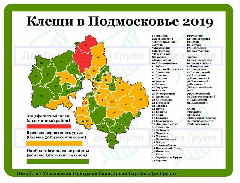 Энцефалитный клещ в Москве и Подмосковье