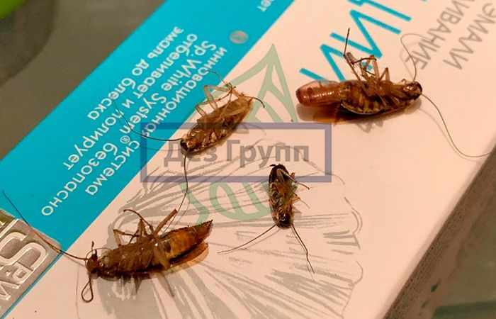 Тараканы могут кусаться, если в доме не находят пропитание