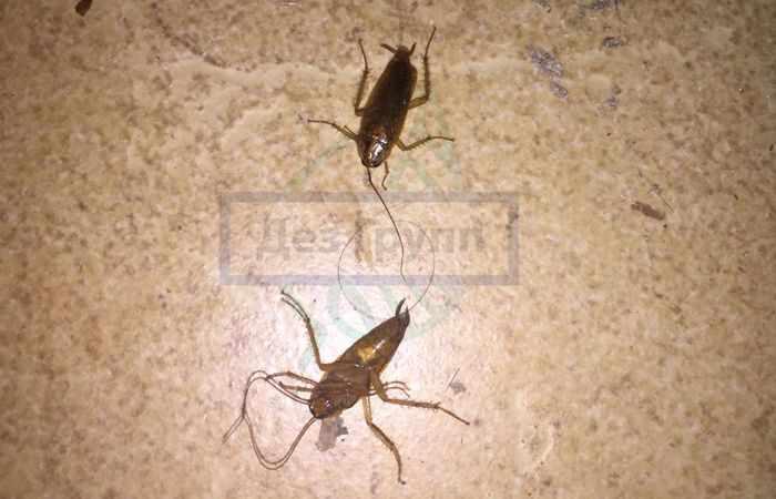 Служба по выведению тараканов