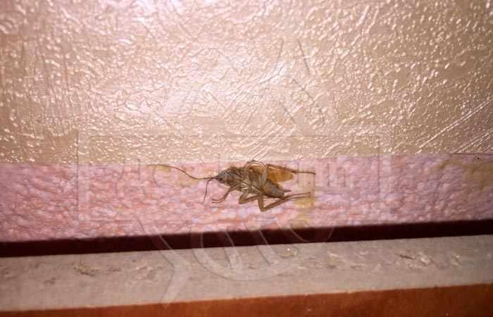 Дезинсекция насекомых от клопов до тараканов
