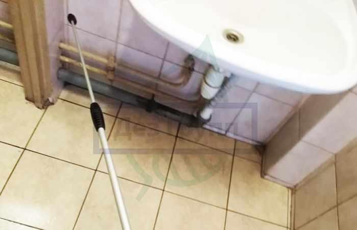 Чешуйница в ванной и как от неё избавиться в Москве