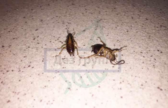 Как избавиться от тараканов в магазине