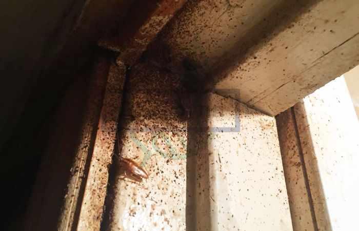 От соседей ползут тараканы: что делать