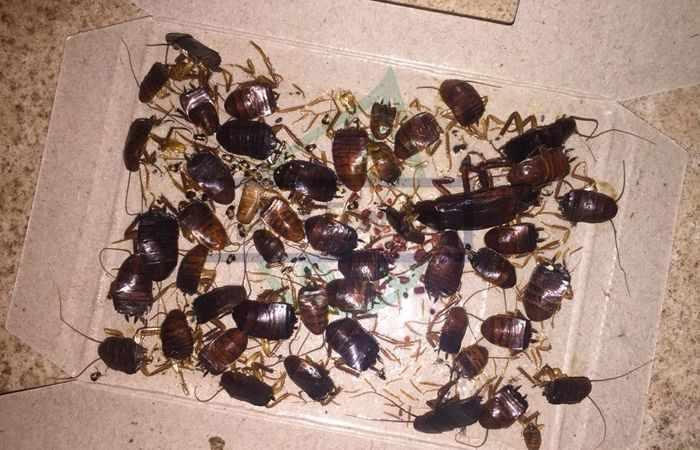 Бытовые инсектициды от тараканов
