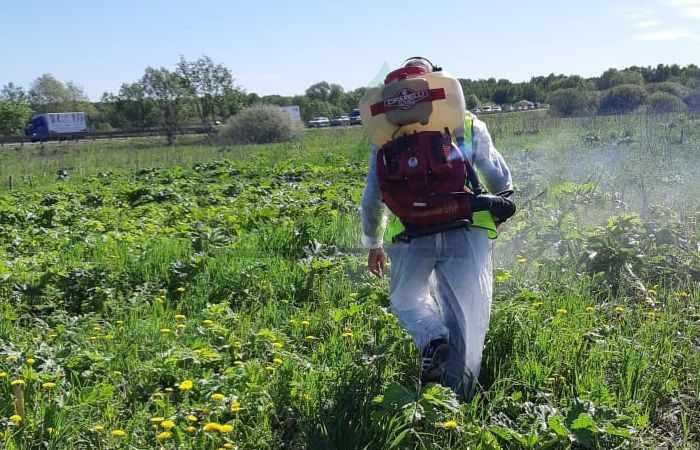 Уничтожение клещей и комаров в беседках и на верандах
