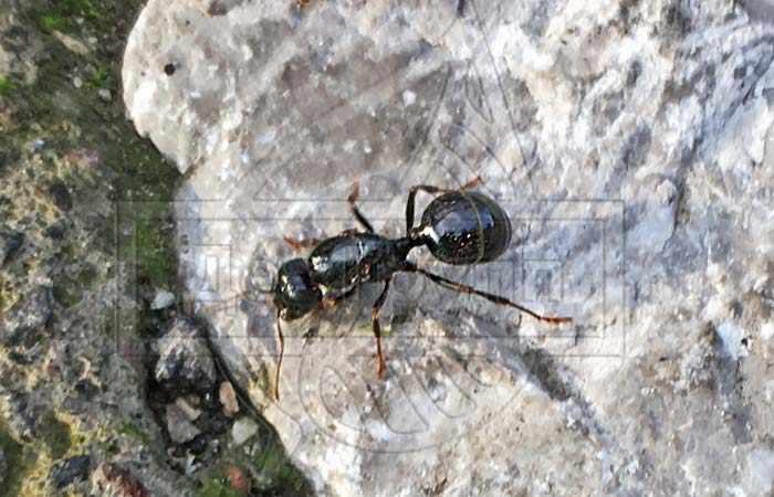Борьба с муравьями на дачном участке - народные методы