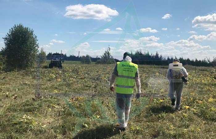 Обработка земельного участка от клещей специалистами СЭС